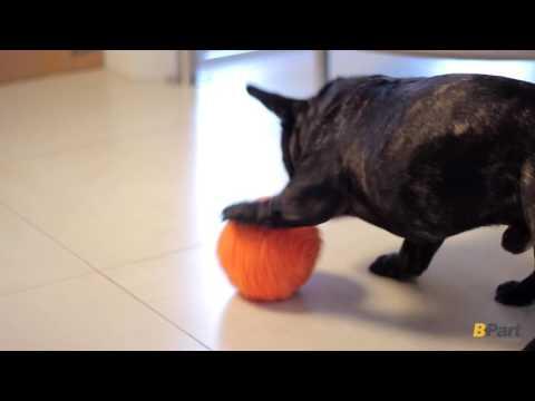 Bola Robotica para Mascotas