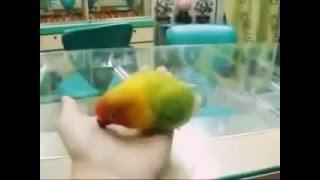 Попугай который видел секс своих хозяев