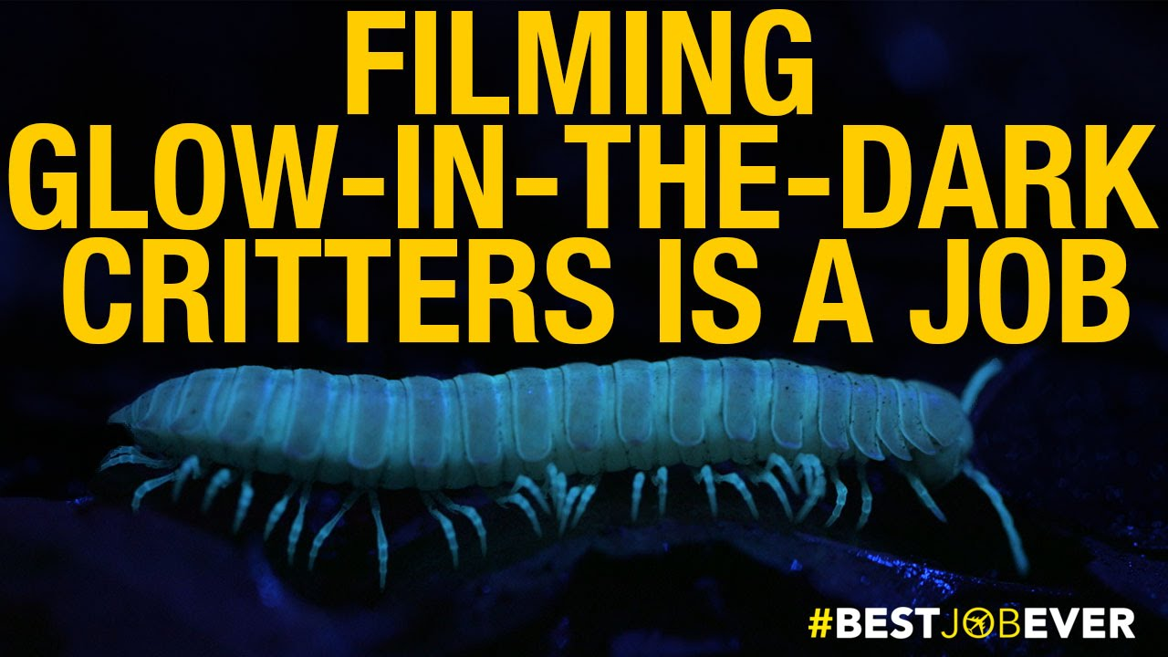 Filming Glow-in-the-Dark Critters | Best Job Ever thumbnail