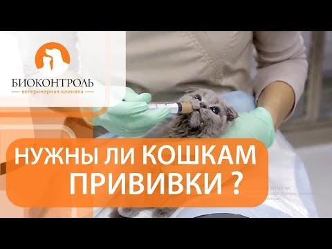 Вакцинация кошек. 💉 Плюсы и минусы вакцинации для кошек.