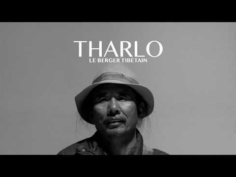 Bande Annonce - THARLO, le berger tibétain de Pema Tseden