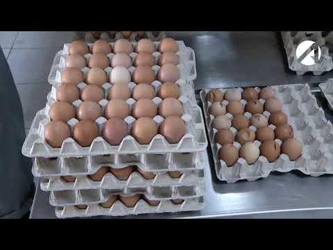 В Астраханской области зарегистрирован грипп птиц на птицефабрике