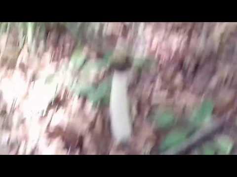 Film sesso con gli animali vedere online gratis