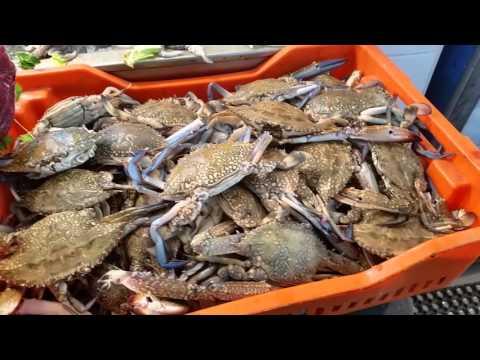 Comprare un povodochnitsa per pescare in Mosca su esso è la ferita