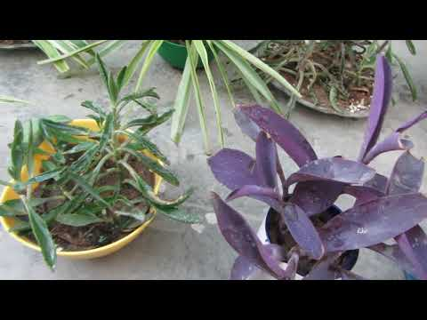 Small Pot Gardening | Ideas To Grow Plants In Small Pots & Update | Urdu/Hindi