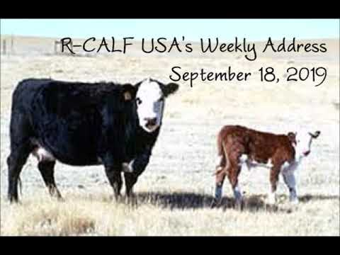 Dakota Cattle Producers Are Concerned for Their Industry