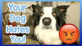 Does Your Dog Hate You? 5 Top Tips to Find Out if Your Doesn't Love You!