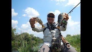 Crazy fish ebisu ii gold