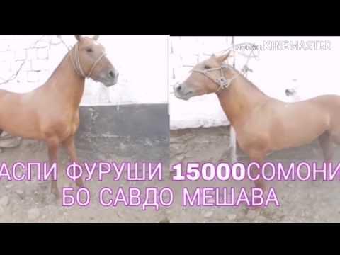 Таджикистане продают лошадь на рынок