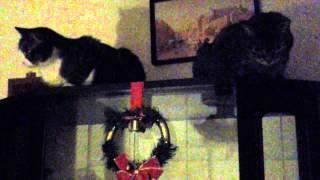 """Boże Narodzenie 2013 """" Cicha noc, Święta noc"""""""