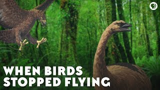 When Birds Stopped Flying