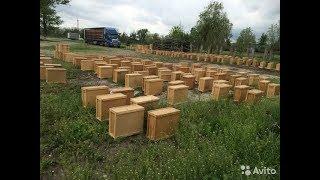 ПЧЕЛОПАКЕТЫ для пчеловодов с гарантией .