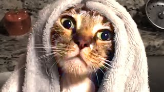 Cute Silly Cats | Funny Pet Videos