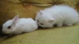 Домашние Животные, White Bunny VS White Citten