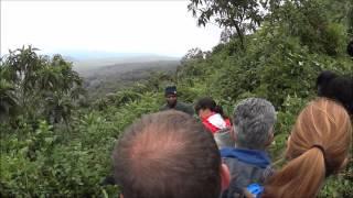 preview picture of video 'Silverback gorilla close pass in Rwanda'