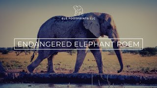 African Elephant Endangered Species Animation