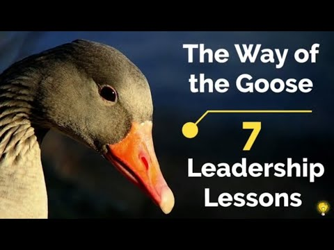 , title : 'Life & Leadership Lessons from the Geese | Wisdom of Geese | Leadership Training
