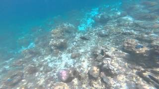 preview picture of video 'First 2 snorkles on the House Reef at Kuramathi'