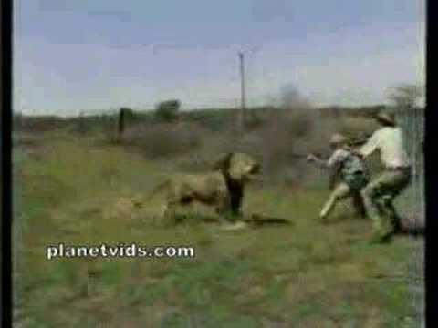 شجاعة اسد