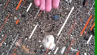 Камушки, цветочки, травка, песочек, я.