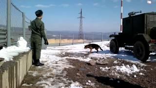 Без страшный пёс, военный пёс!)