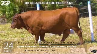 Coro 2228 fiv