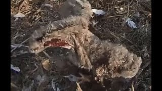 SWFL Eagles ~ 1/14/20 ~ E14 is Seriously Injured