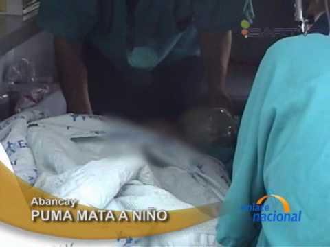 (Imagenes fuertes) Niño muere devorado por puma en zoologico