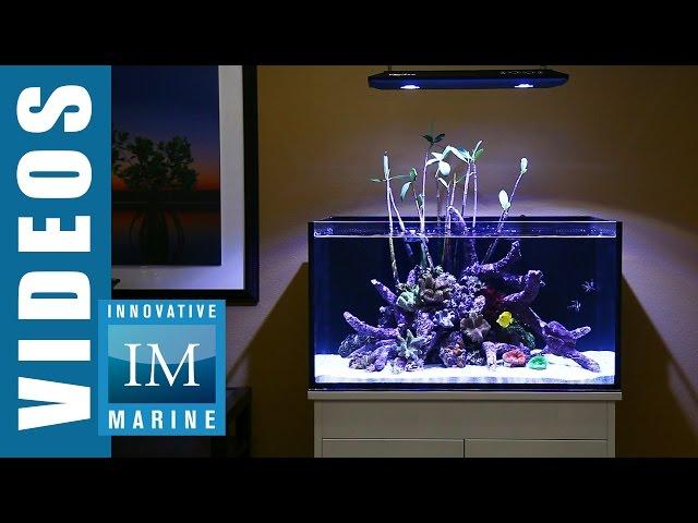 Lagoon Style Aquascaping - Lagoon 50 Gallon by Innovative Marine