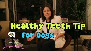 Healthy Teeth Tip for Dogs - Dog Gone Good