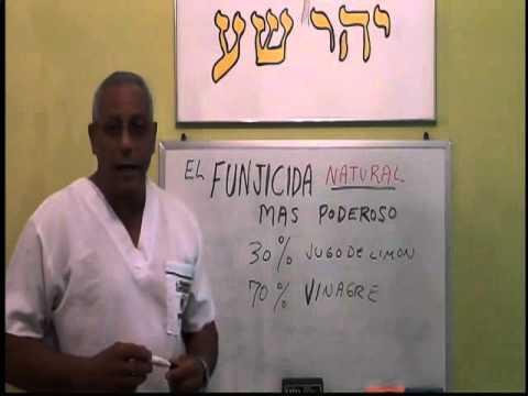 El tratamiento del hongo de la uña por el limón y el aceite de la celidonia mayor