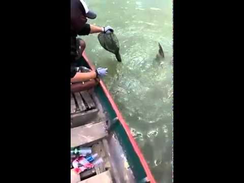 Nó câu con cá nhìn cực khổ quá