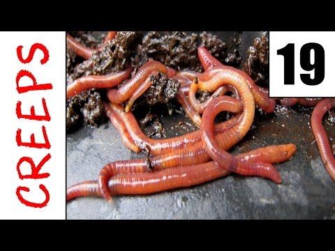Wenn es die Würmer nicht gibt werden sterben