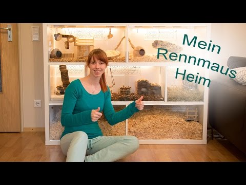 Rennmaus Gehege/ Kallax IKEA
