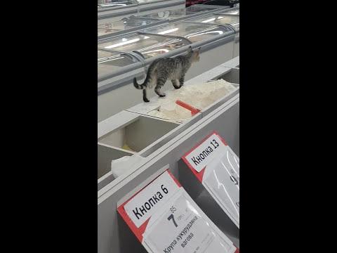 В киевском супермаркете кот справлял нужду в весовом сахаре