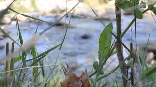 Video del alojamiento Cabañas Altomira
