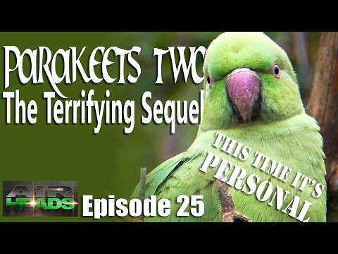 Parakeets II…this time it's personal – AirHeads, episode 25
