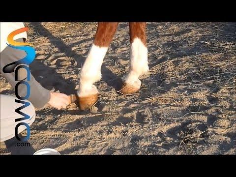 Cómo engrasar cascos de caballos