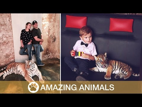 Family Keep Tigers As Pets