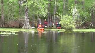 preview picture of video 'Merchants Millpond State Park'