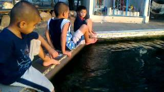 hornos sonora 06072011 agua caliente.m