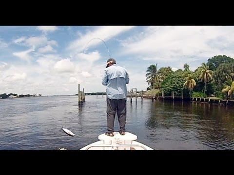 Agua Salada Pesca con Mosca - Jacks y Bluefish Florida USA