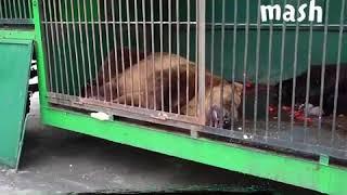 DEITA.RU Страшные кадры из зоопарка в Рязани