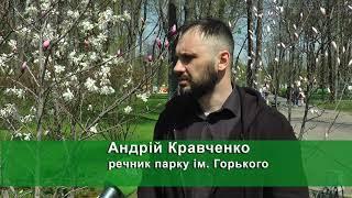 У парку Горького розквітнули магнолії