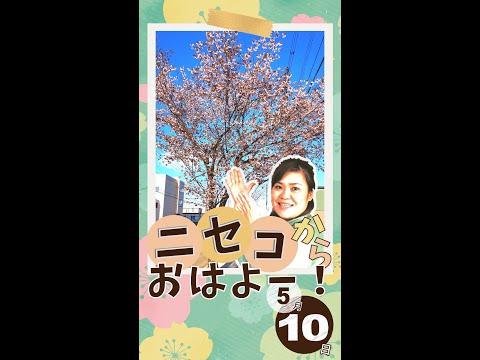 【桜】北海道ニセコからおはよー!<2021年5月10日>|毎週月曜朝8時、ニセコから元気をお届け! #Shorts