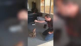 Смешные собаки Приколы про животных 2018