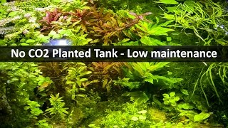 No CO2 Planted Tank | Low maintenance Aquarium