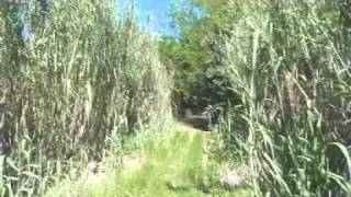 preview picture of video '1h20m de Viajes en Zorra CGBA - 2011'