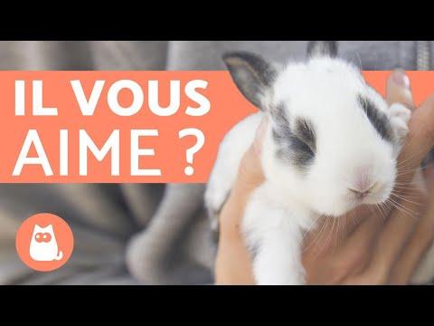 , title : 'Comment savoir si mon lapin m'aime ? - 5 signes révélateurs !