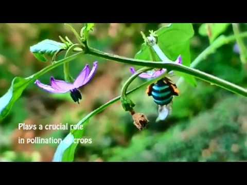 Ya'll Ever See A Blue Bee? 🐝🐝🐝